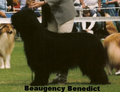 "Her brother ""Murphy"" - Beaugency Benedict"