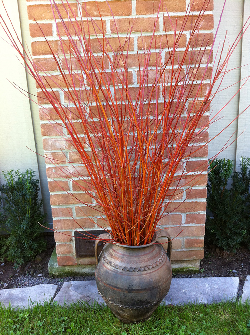 thebranchranch-flamewillow2-9-13.jpg