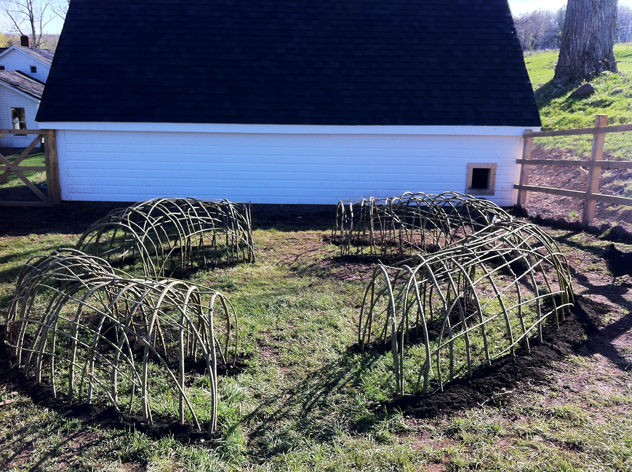 Living Willow chicken tunnels by Don Statham