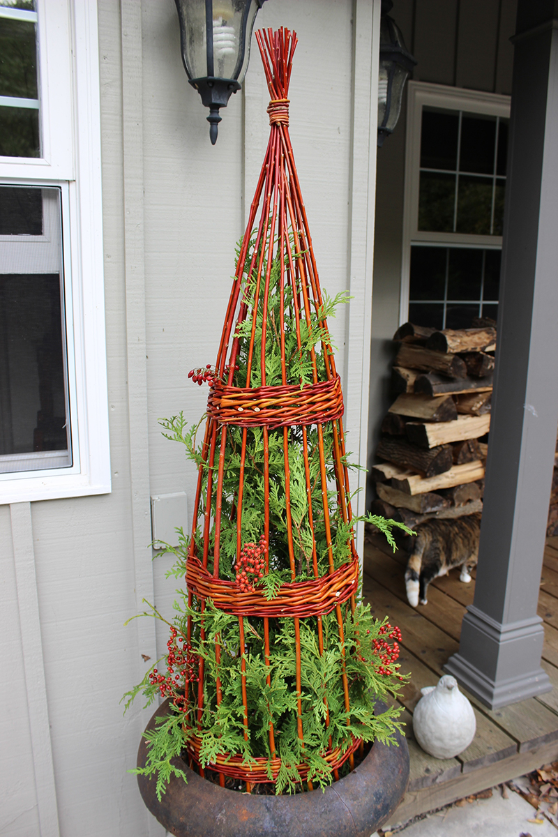 We have made some tall flame willow obelisks, putting them in a winter container with lights or lining 3 or 5 up in a row in the garden with lights will make a dramatic statement in the winter garden landscape.