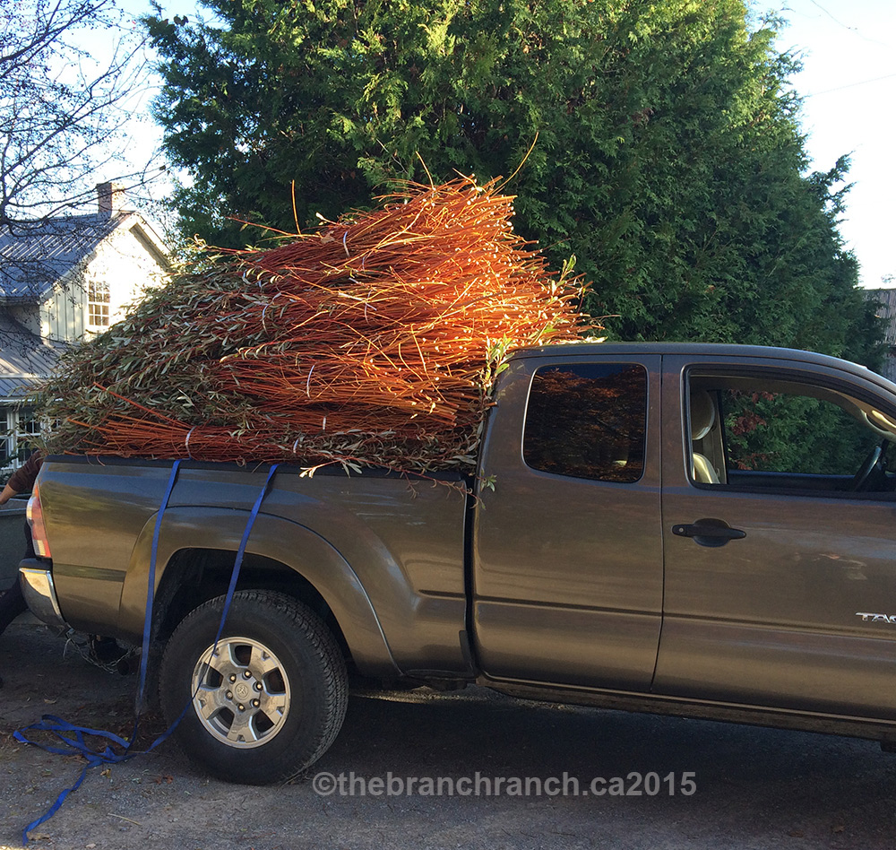 The truck loaded with branches off the field.