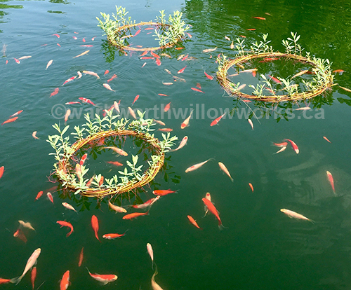 Pond Rings can be made during any of the living willow tree classes.