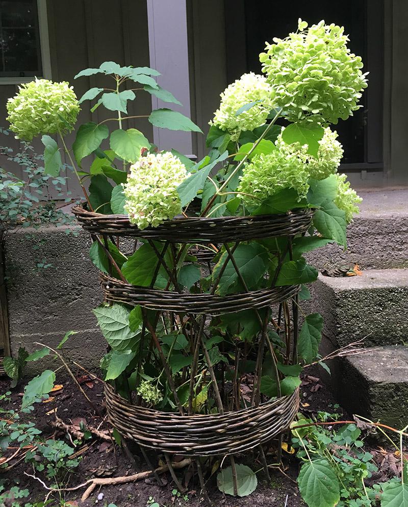 plantcollar.jpg