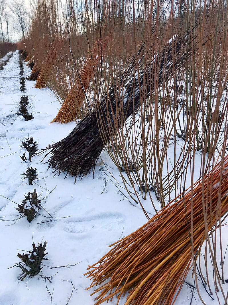 winter-fields.jpg