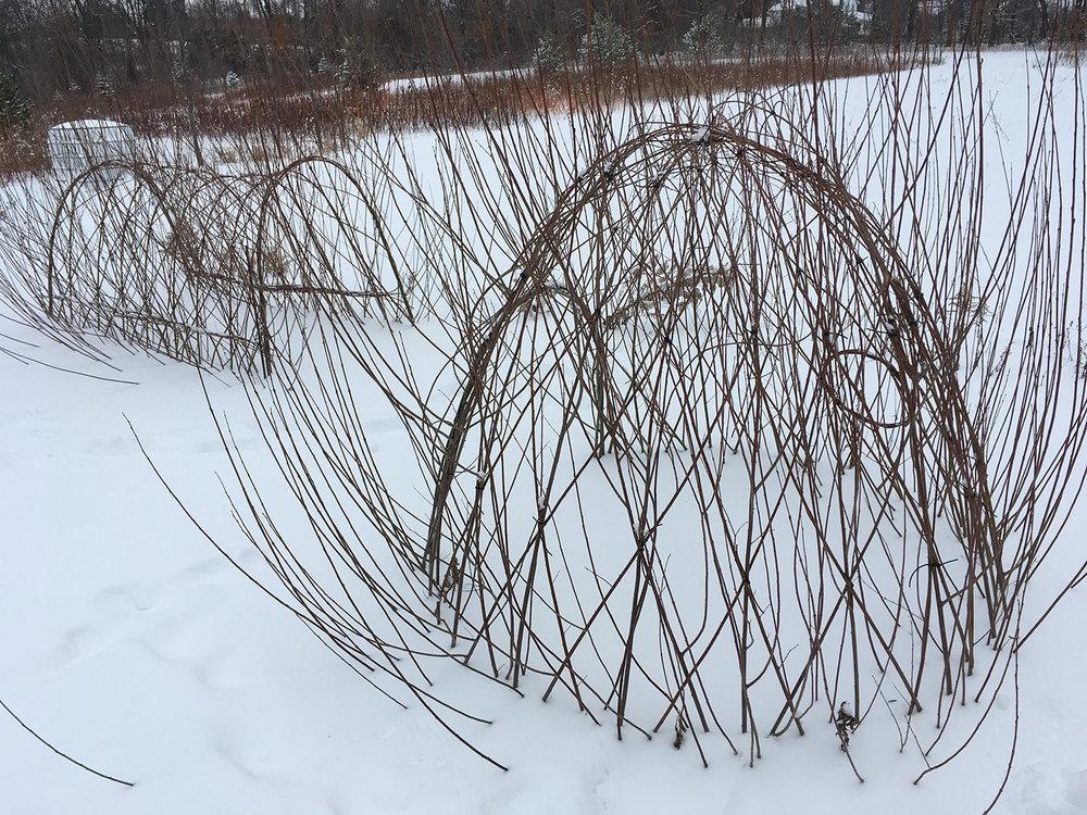 Winter 2017 before re-weaving begins.