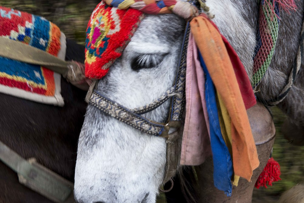 There are mules everywhere (and what they leave behind). They are used to haul building materials and food up and down the mountains. Usually 6 or 7 in a group. A man behind them with a small whip urging them to go....
