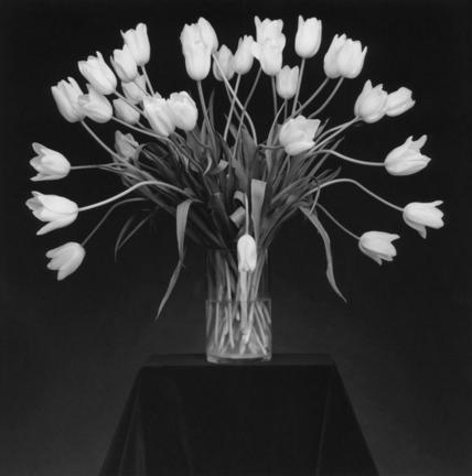 Tulips, 1988 (image courtesy Robert Mapplethorpe Foundation)