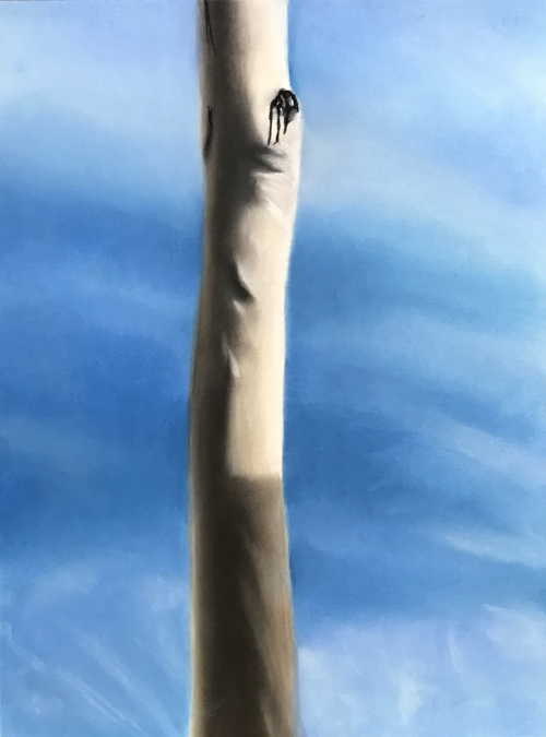 "Sap Limb I (Hollywood Eucalyptus mid-day), chalk pastels on mixed media paper, 18"" x 24"""