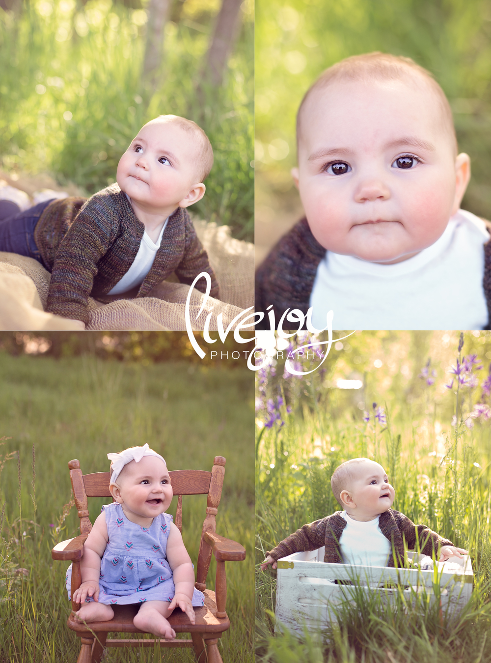 6 Months Baby Photography - LiveJoy Photography - Oregon