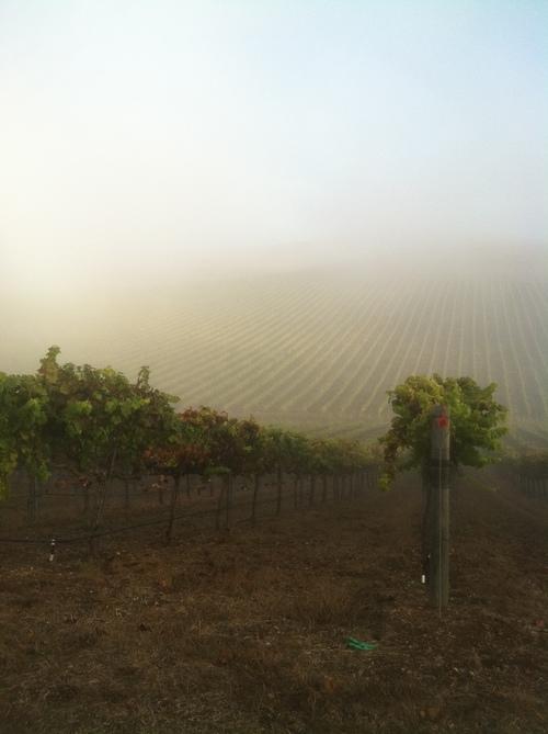 AM-coastal-fog1.jpg
