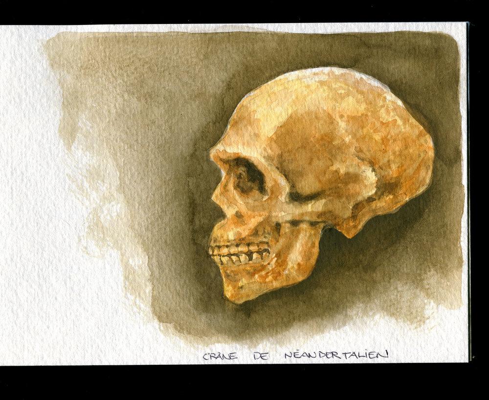 Crâne de Néandertalien.jpg