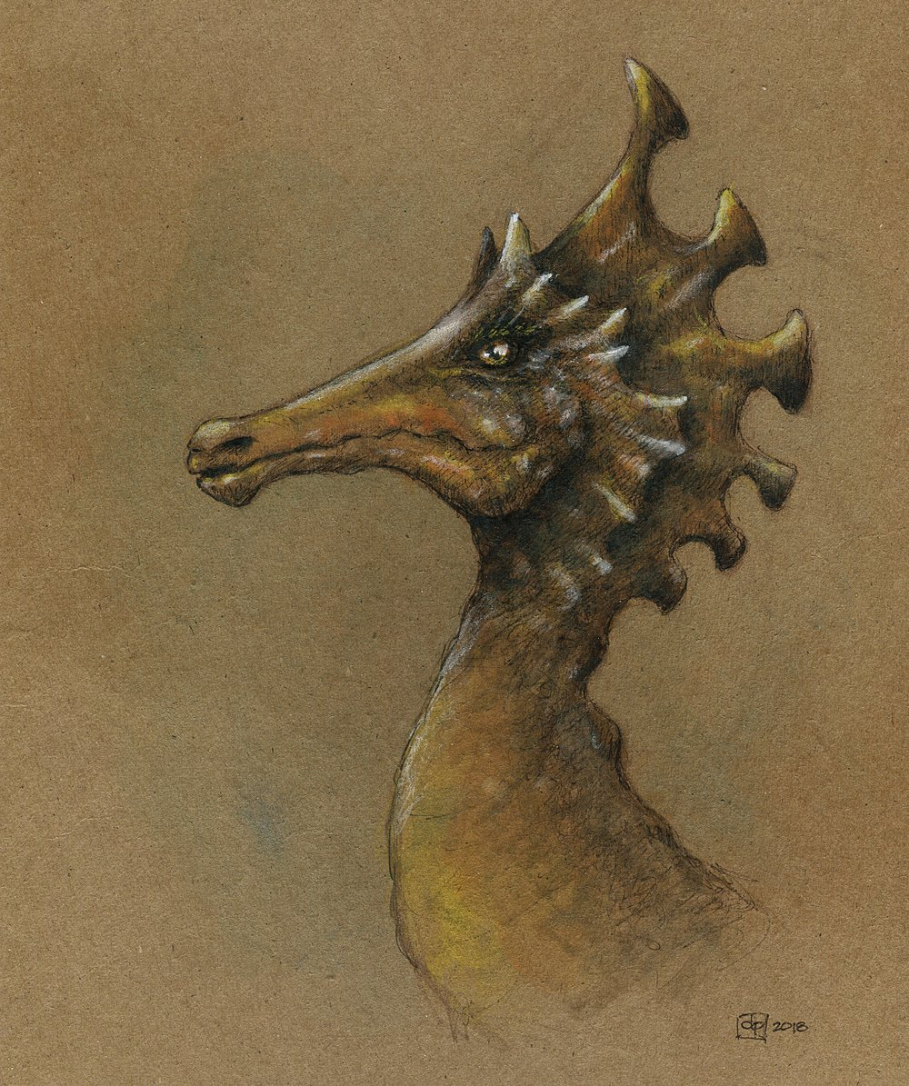Seahorse head.jpg
