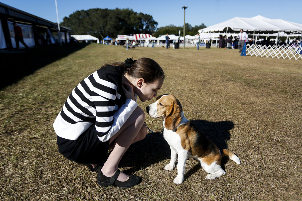 "Shannon ""Jupiter"" Piquet, 14, kisses Gwen, a 15 inch Beagle, before showing in Junior Showmanship during the Florida Gulf Coast Cluster all breed dog show on Thursday January 12, 2017 at Florida Classic Park in Brooksville, Fla.   ""I have a lot of bad anxiety, so this is a great stress reliever,"" Piquet said. ""I feel at home when I'm in the ring."""