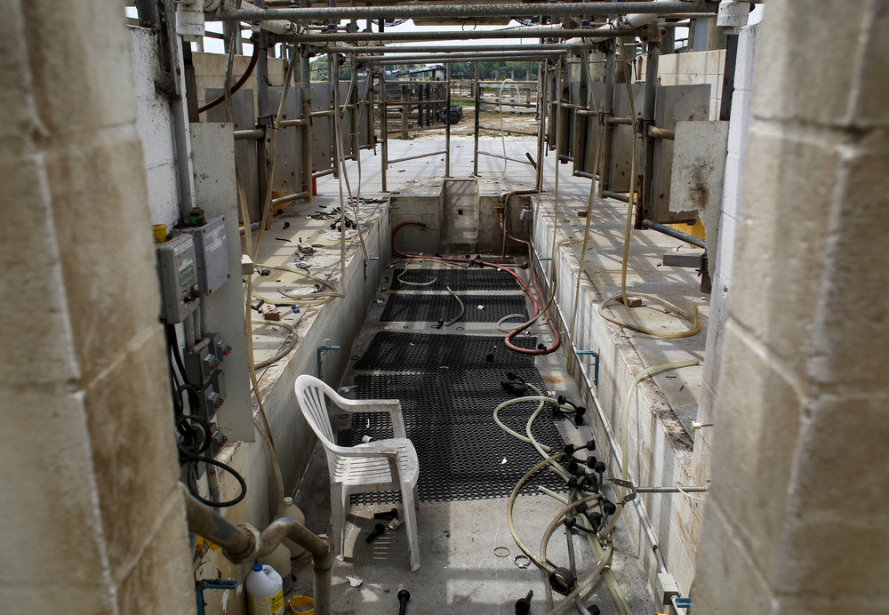 The old milking parlor at Tower Dairy in Tampa, after Jeff and Sammy Busciglio took the roof and salvaged other parts and pieces for use on their new farm in Georgia, photographed on April 17, 2017.
