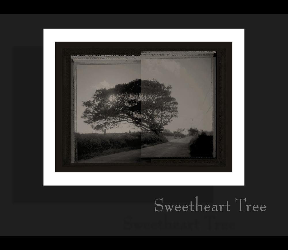 sweethearttree.jpg