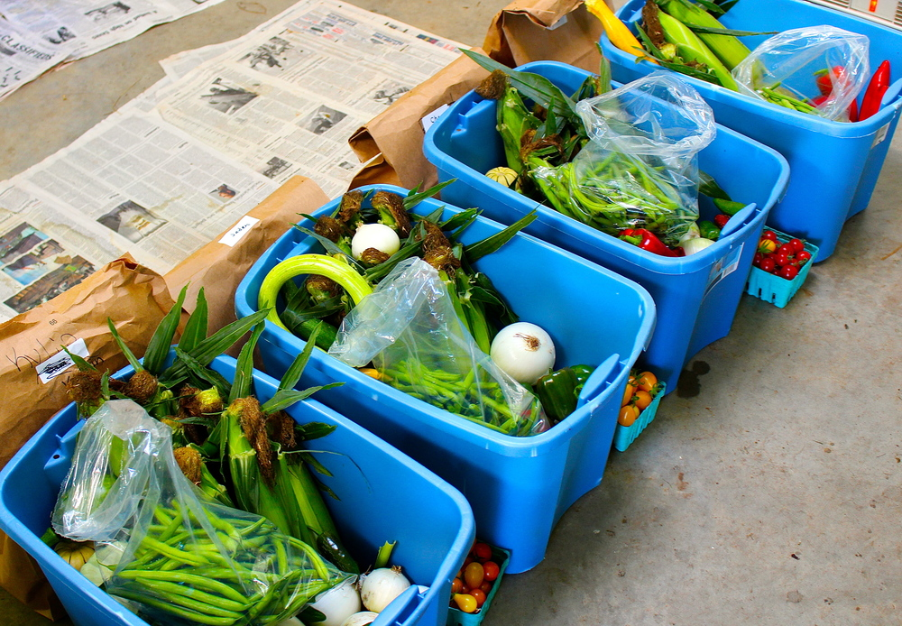 Four full shares of CSA produce (one bin = one share) at  Dolan Creek Farm