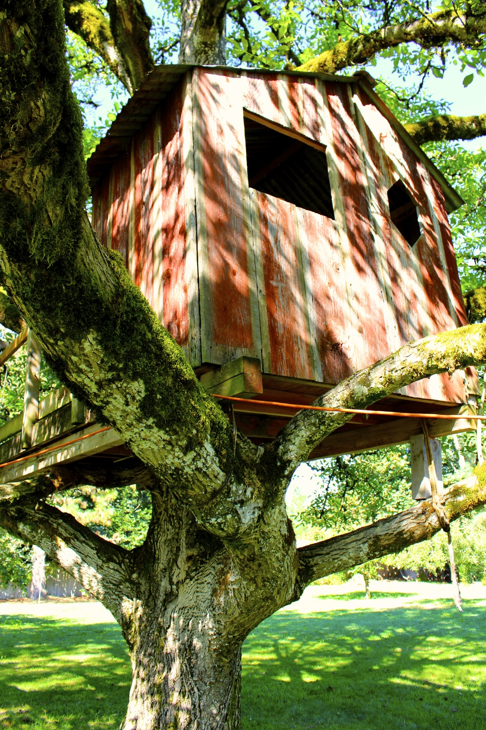 The treehouse from another angle
