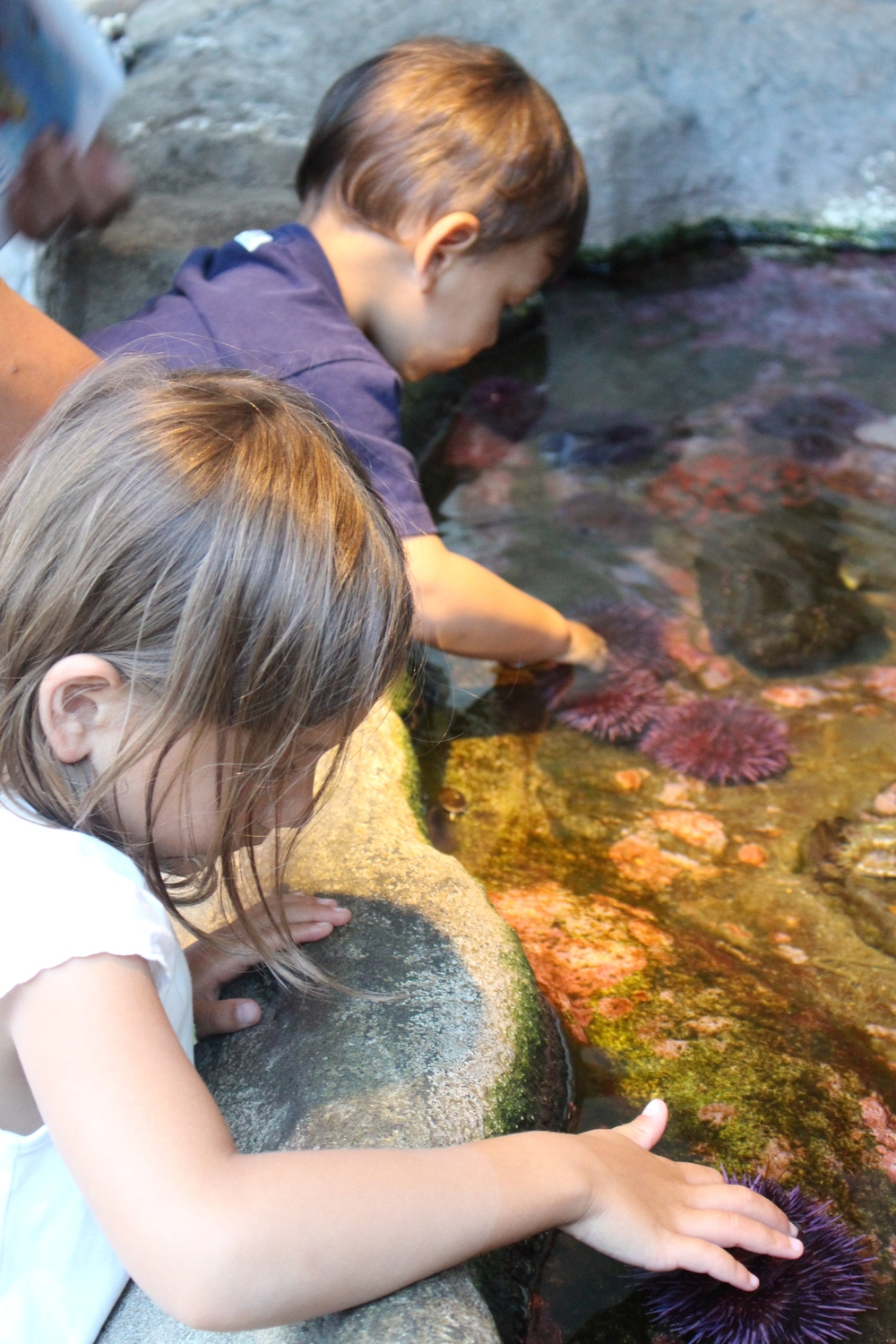 My children touching sea anemones at Hatfield Marine Science Visitor's Center tidepool exhibit