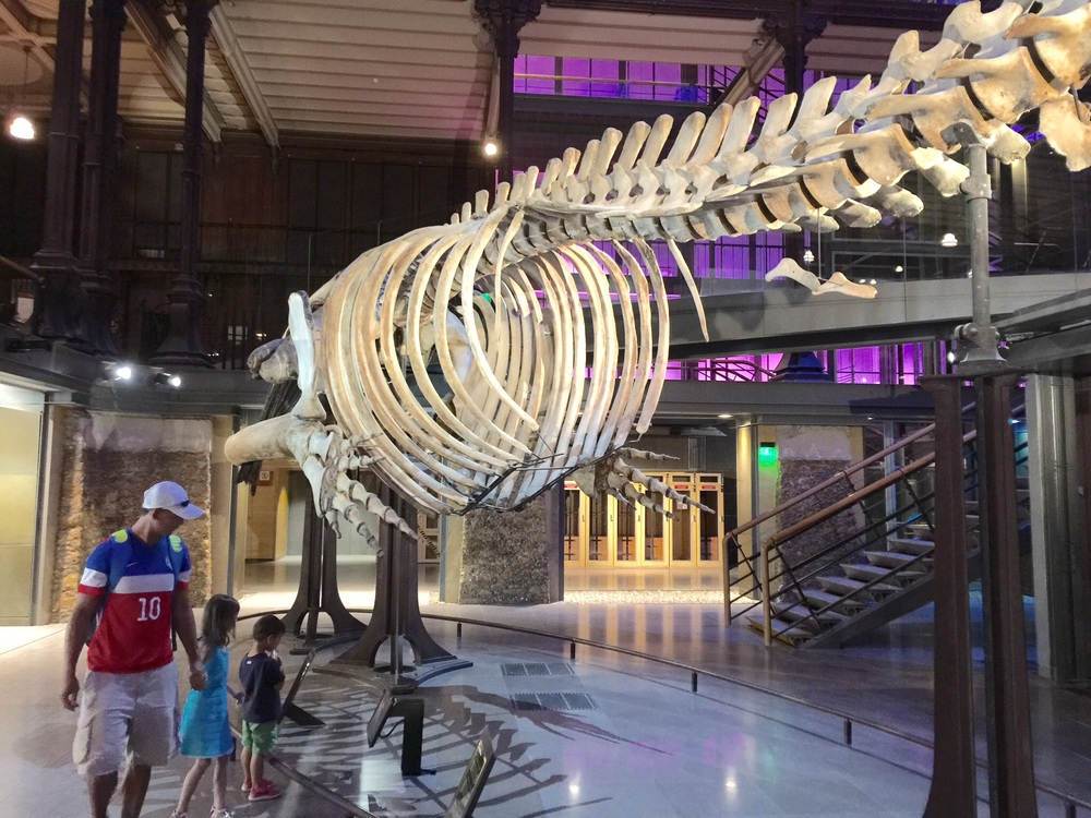 Whale skeleton in the Ménagerie, Paris