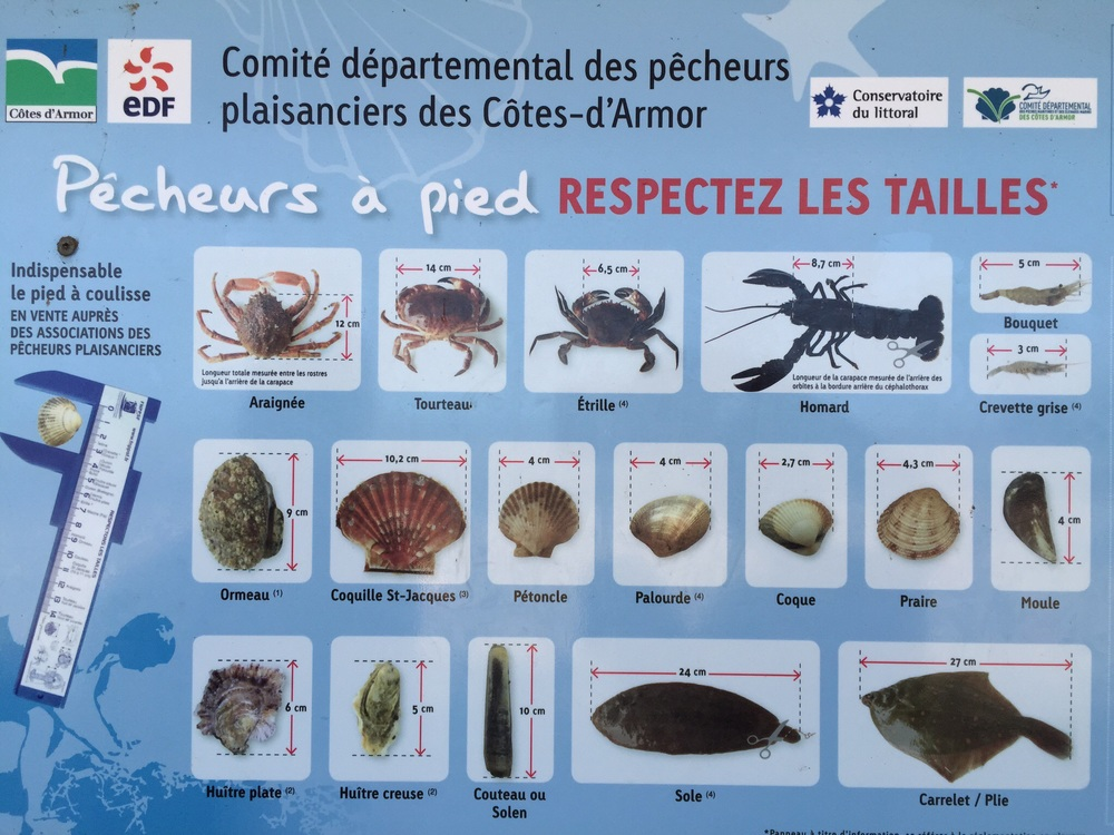 Some of the sea life that beachcombers and fishermen can find in Bretagne, France