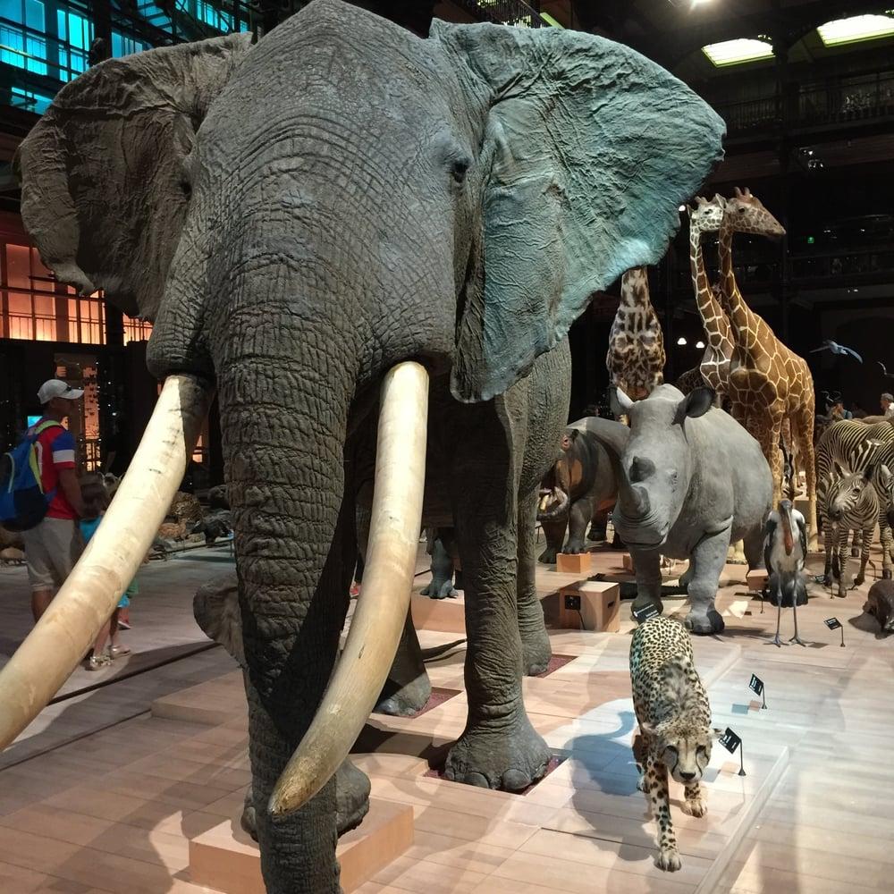 Defilé des animaux on the main floor, Galerie de l'Evolution, Jardin des Plantes, Paris