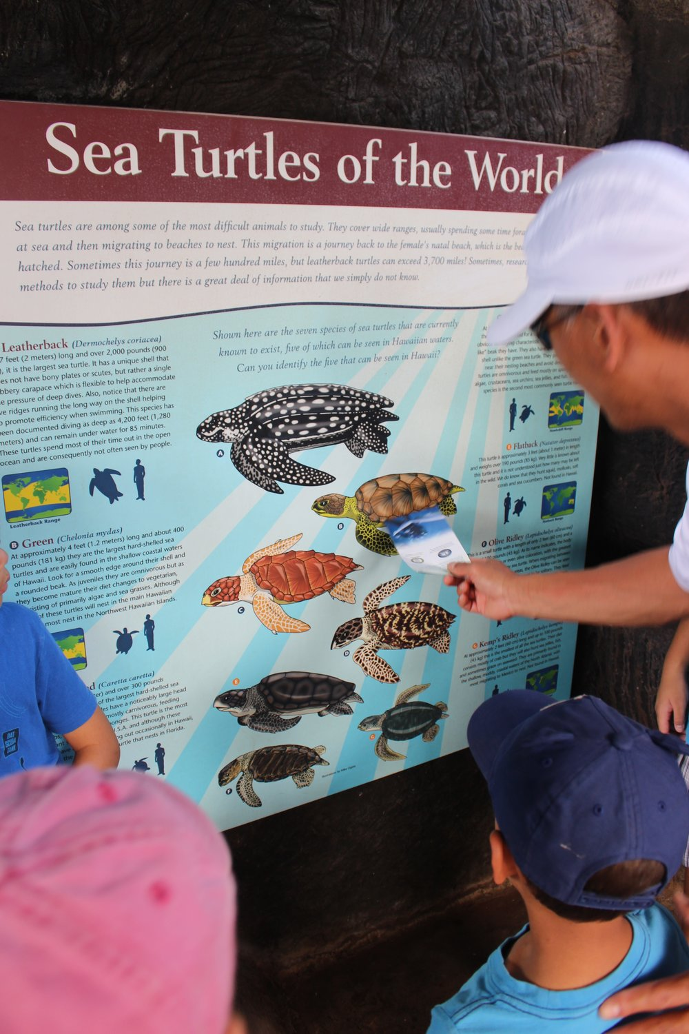 Sea Turtles of the world poster hawaii maui family center ocean
