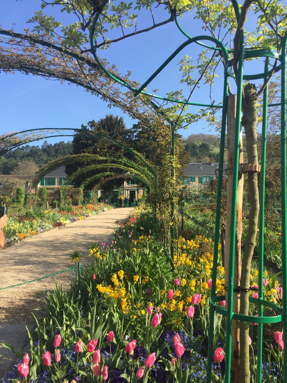 Giverny Monet Early April blooms stunning