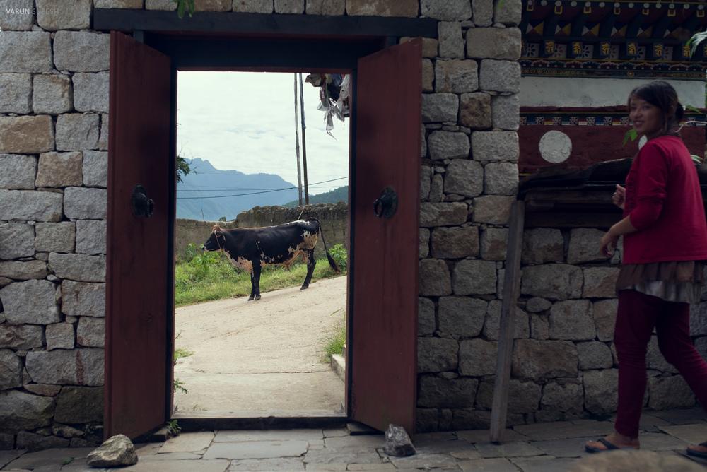 Bhutan_115.jpg