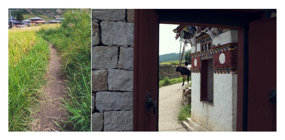 Bhutan_119 copy.jpg