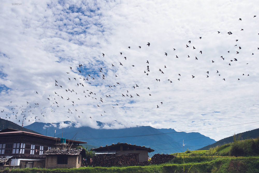 Bhutan_122 copy.jpg