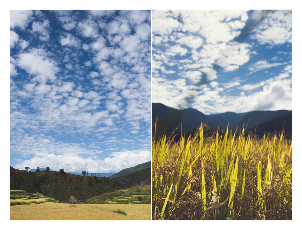 Bhutan_124 copy.jpg