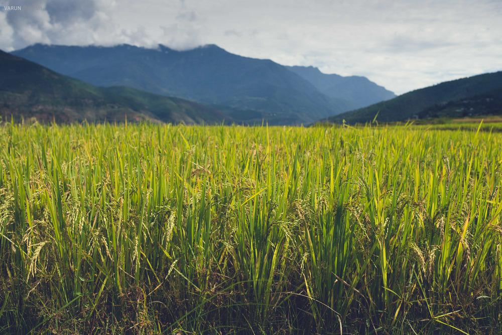 Bhutan_128.jpg