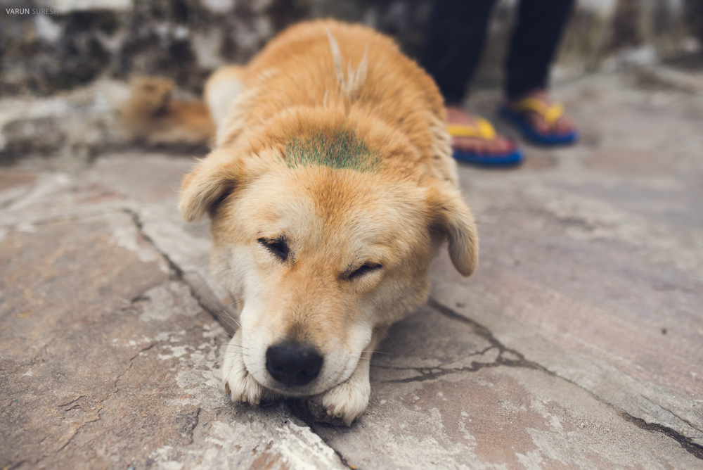 Bhutan_150.jpg