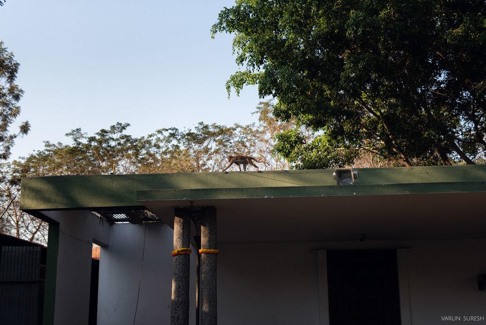 Pavithra_Bharath_22.jpg