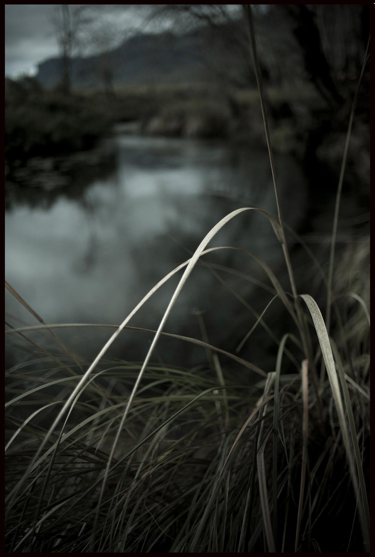 reed2 black.jpg