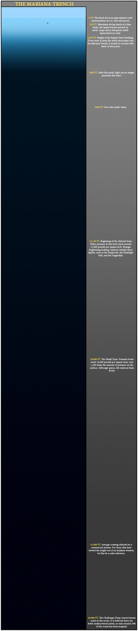 successisnotanoption :       Mariana Trench to Scale     I need to emphasize — a lot — that this is  amazing .   People never even think about how much down below there is we haven't even been able to try to see.   Just click that thing already.