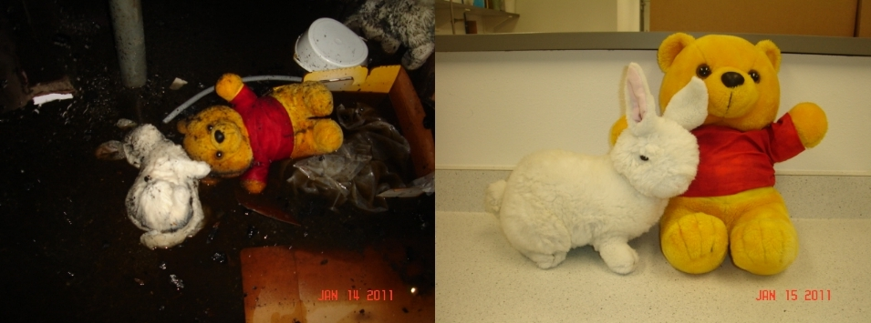 Water Damaged Stuffed Animals - Before and After