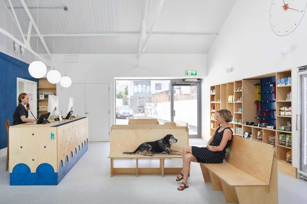 The modern ply-wood furniture by Alma-Nac was custom-designed for the vets with seating for dogs at one side and benches with higher sides at the opposite end of the room for cats (Jack Hobhouse)