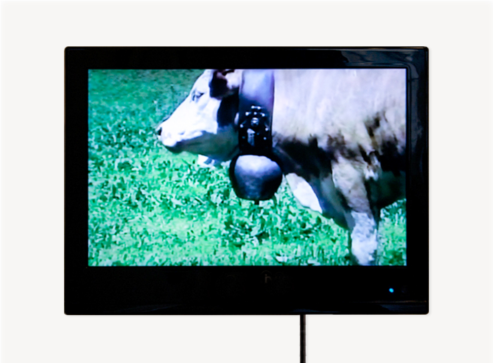 "Paul Kos, La Vache, 1996, Color video with sound                                  Normal     0                     false     false     false         EN-US     JA     X-NONE                                                                                                                                                                                                                                                                                                                                                                                                                                                                                                                                                                                                                                                                                                                    /* Style Definitions */ table.MsoNormalTable 	{mso-style-name:""Table Normal""; 	mso-tstyle-rowband-size:0; 	mso-tstyle-colband-size:0; 	mso-style-noshow:yes; 	mso-style-priority:99; 	mso-style-parent:""""; 	mso-padding-alt:0in 5.4pt 0in 5.4pt; 	mso-para-margin-top:0in; 	mso-para-margin-right:0in; 	mso-para-margin-bottom:10.0pt; 	mso-para-margin-left:0in; 	mso-pagination:widow-orphan; 	font-size:12.0pt; 	font-family:Cambria; 	mso-ascii-font-family:Cambria; 	mso-ascii-theme-font:minor-latin; 	mso-hansi-font-family:Cambria; 	mso-hansi-theme-font:minor-latin; 	mso-fareast-language:JA;}"