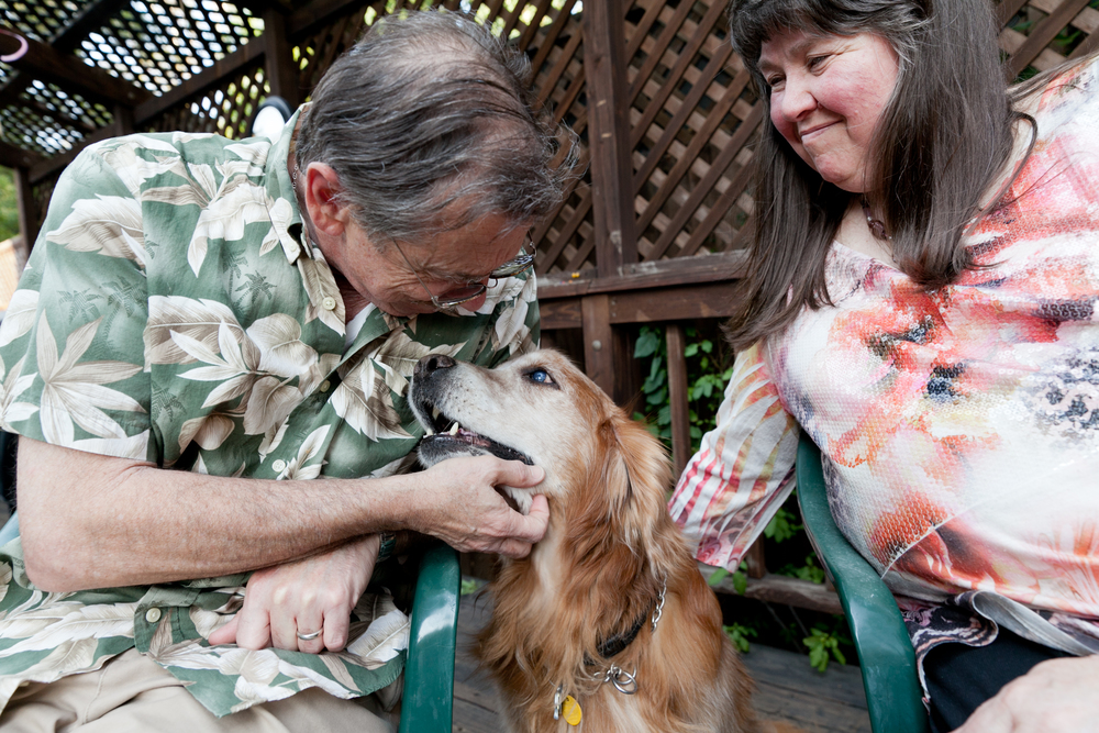 blind golden retriever nuzzling his parents