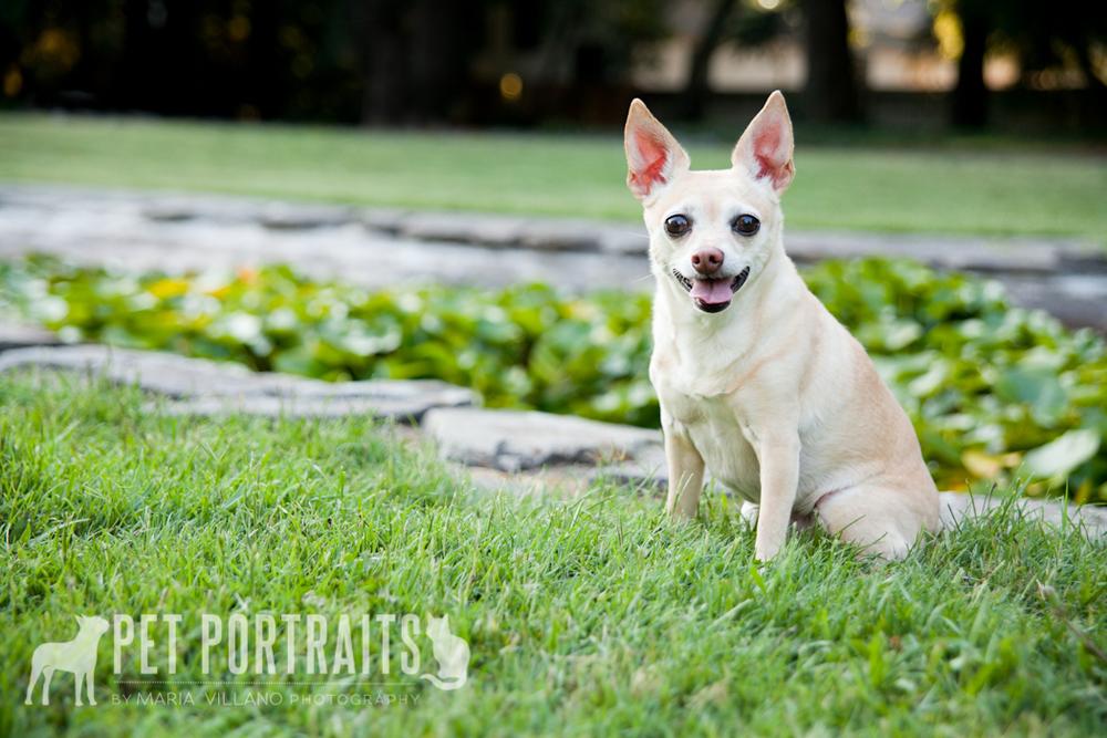 Dog photography Santa Rosa, CA Juiliiard Park