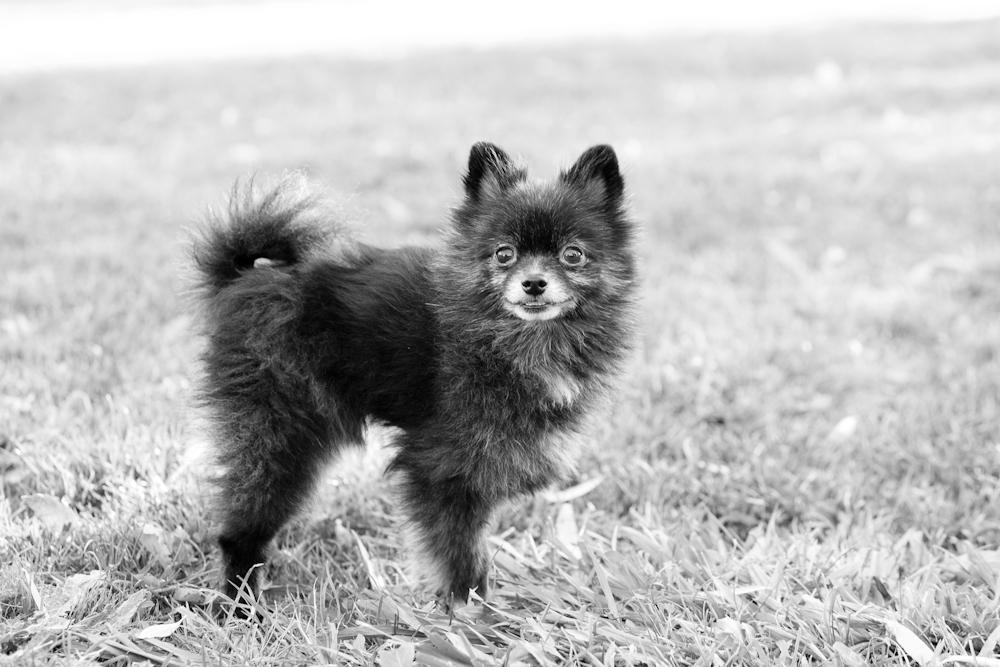 dog photography santa rosa, ca