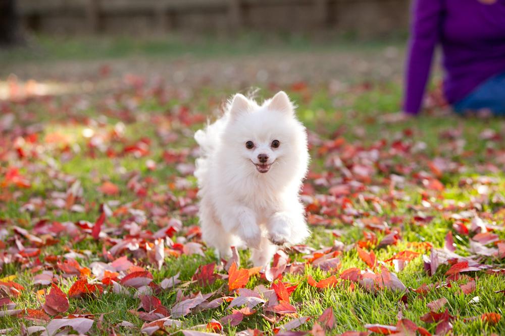 professional dog photographs santa rosa, ca