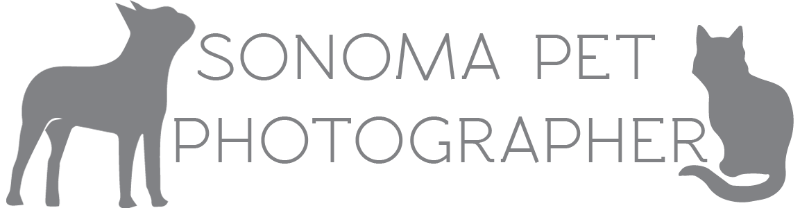 Santa Rosa Dog and Cat Photographer // Sonoma Pet Photography
