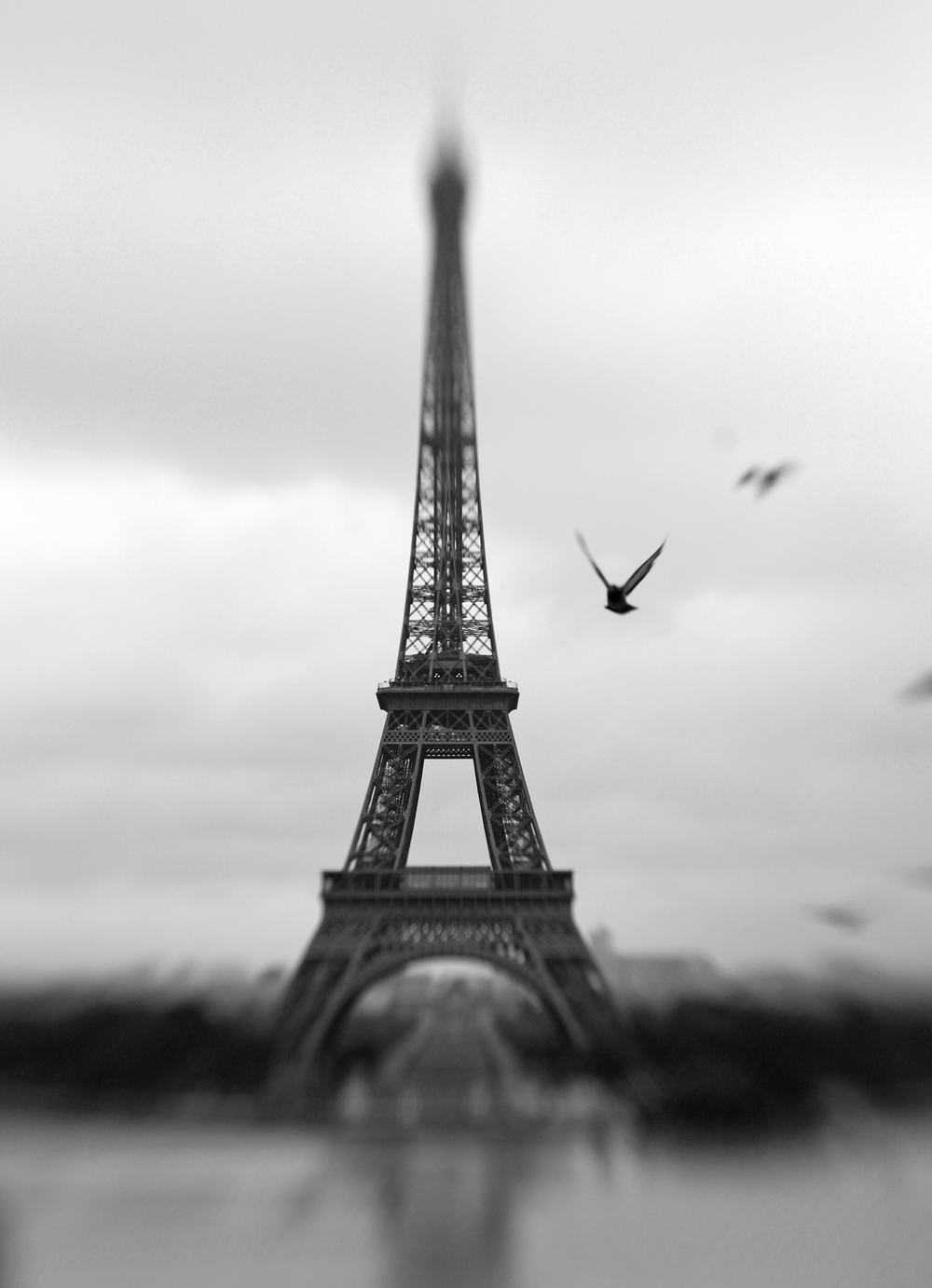 Paris_bird97.JPG