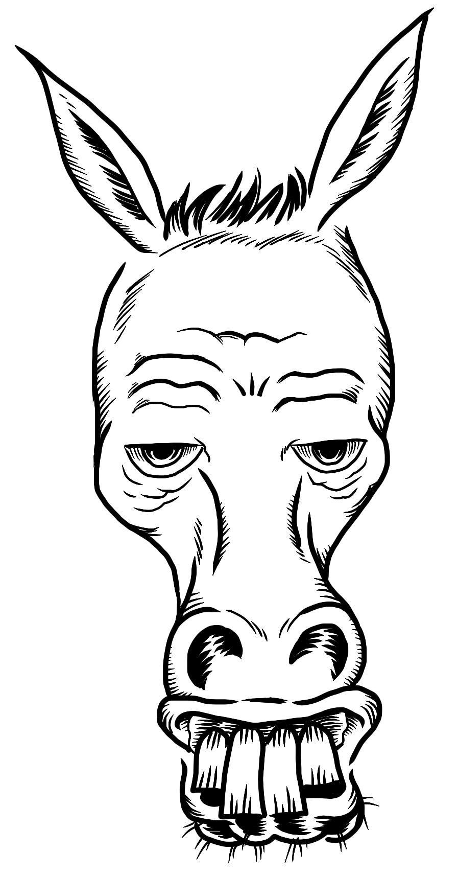 Donkey Front 02