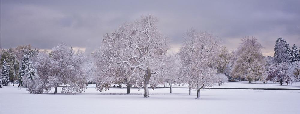 5 Cheesman Snow Trees 1839 .jpg