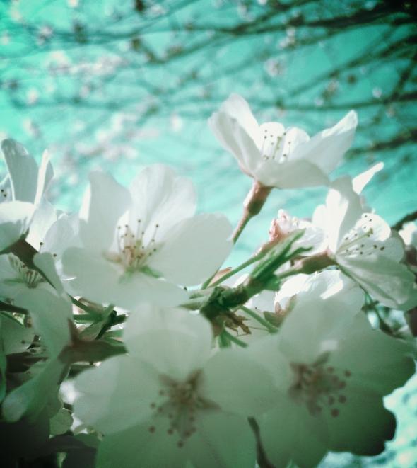 hopeblooms.jpg