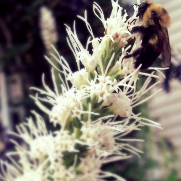 violencebees.jpg