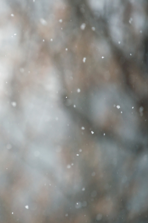 a-urelian: c1tylight5: snow! (by SurprisePally) -